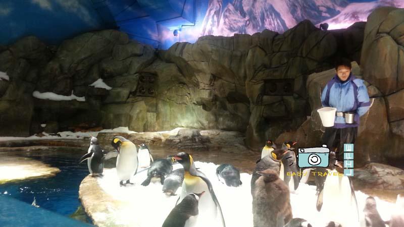 animal ocean park