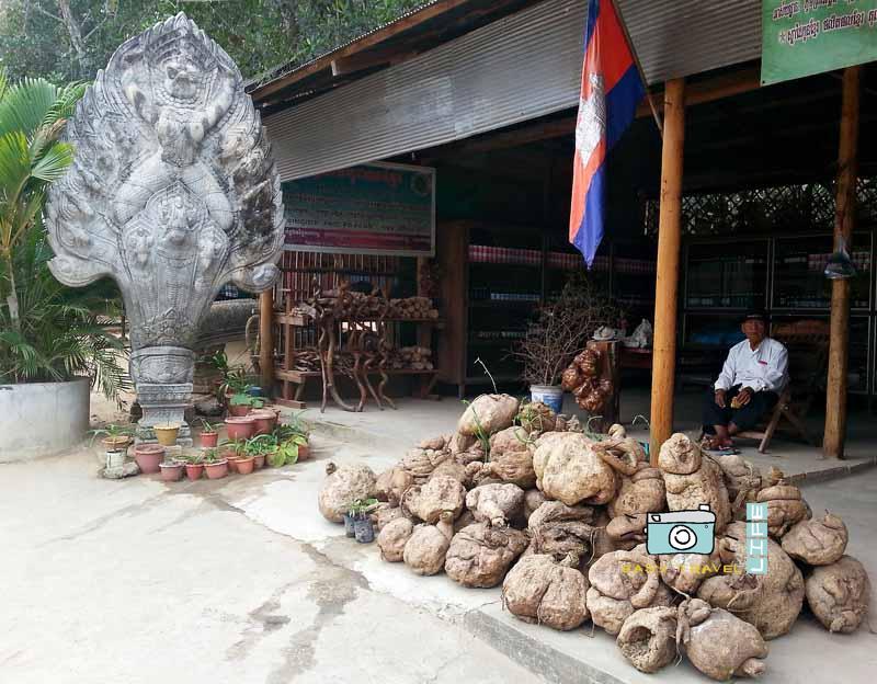 herbs cambodia