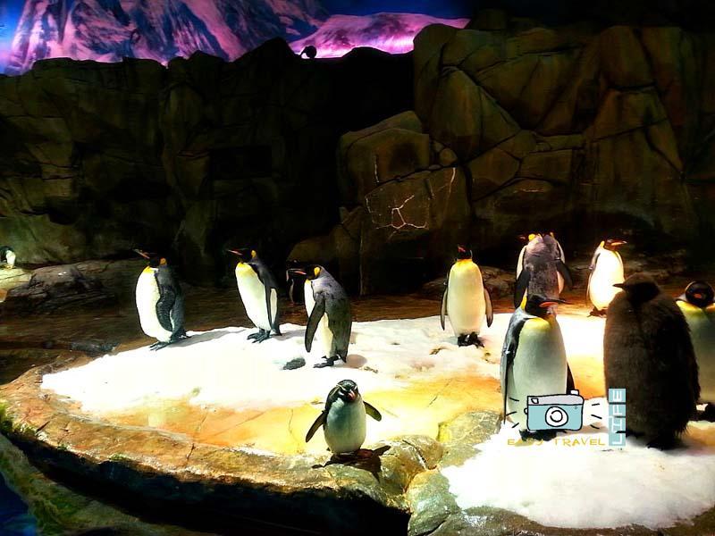 arctic animals in hk