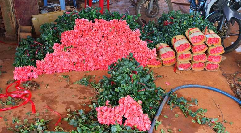 Dalat flowers
