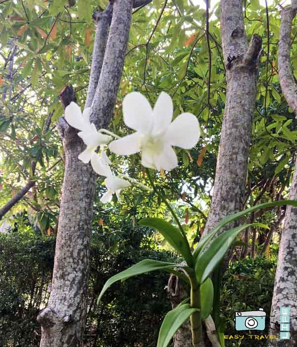 orchids in park