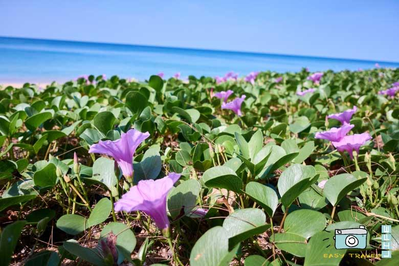 flowers in beach