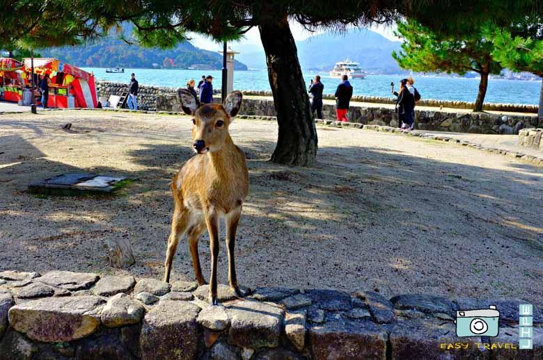 itinerary japan